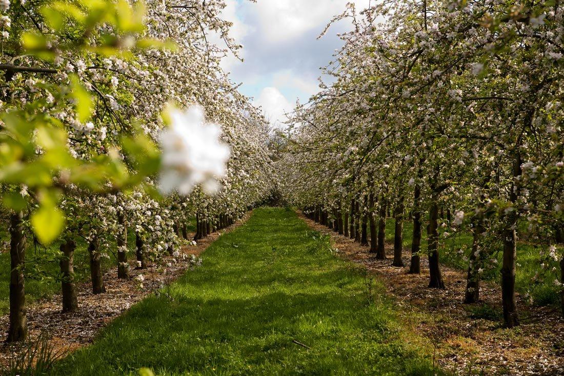 В Брянске появились кованые ворота в будущий яблоневый сад