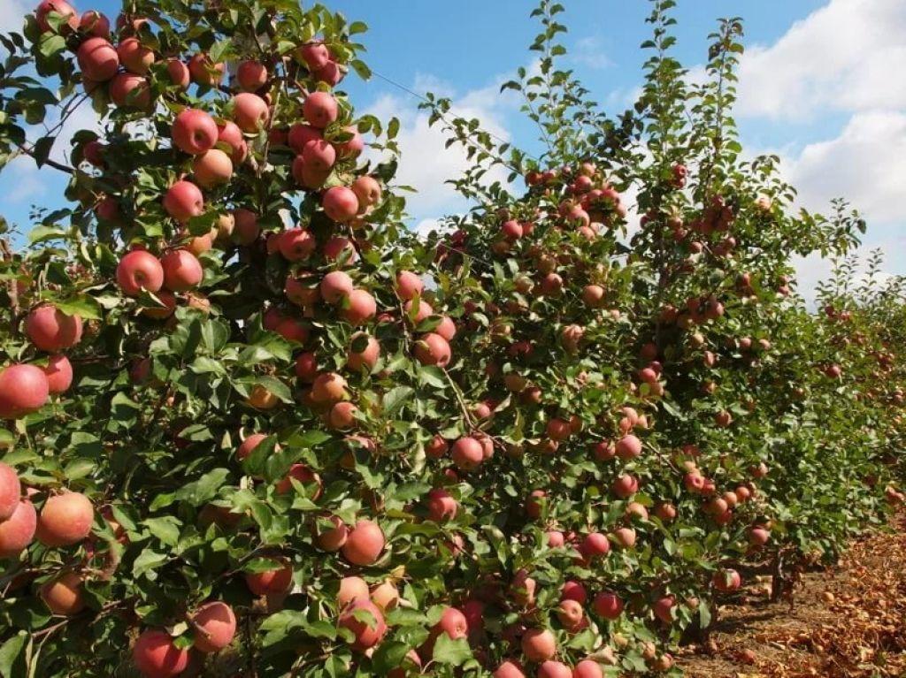 В Клетнянском районе Брянской области введут в сельхозоборот еще 150 га земель