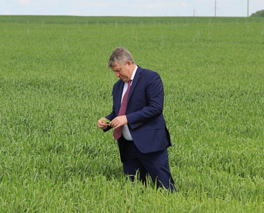Объём сельхозпроизводства в Брянской области приблизился к отметке в 100 миллиардов