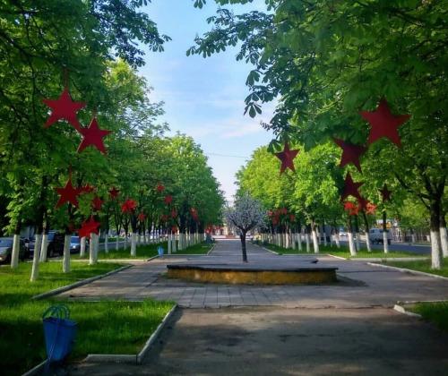 В брянском сквере украсили деревья красными звездами