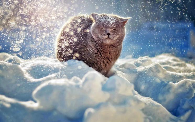 В понедельник в Брянске снег и до двух тепла