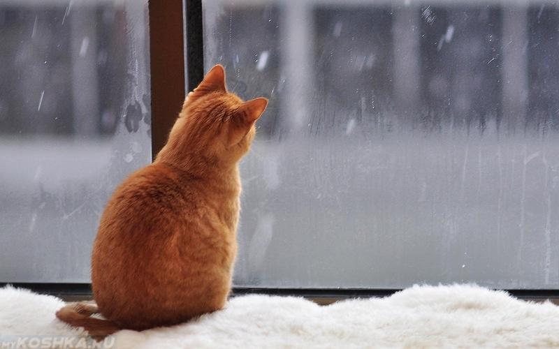 Выпавший на Брянщине снег растает во вторник