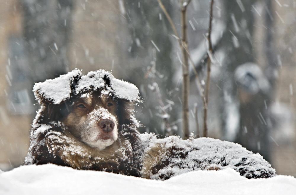 Брянцев предупредили об убийствах собак в Советском районе