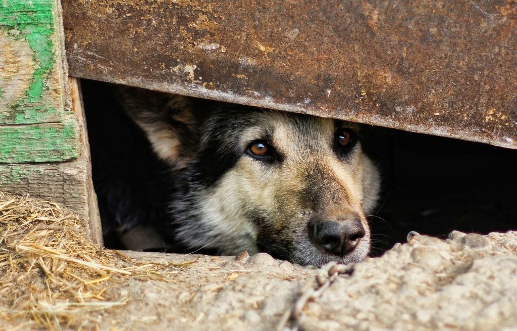 Житель Унечи зверски убивает бездомных животных