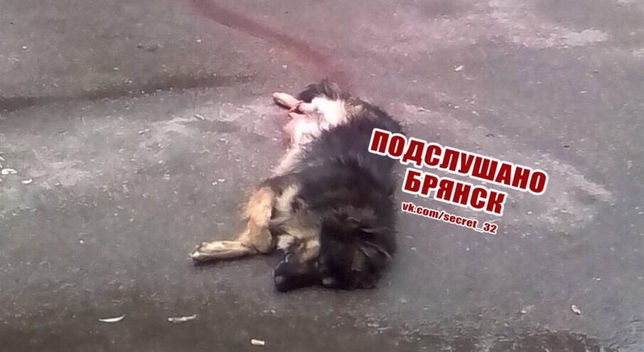 В Брянске автомобилист насмерть сбил собаку и скрылся