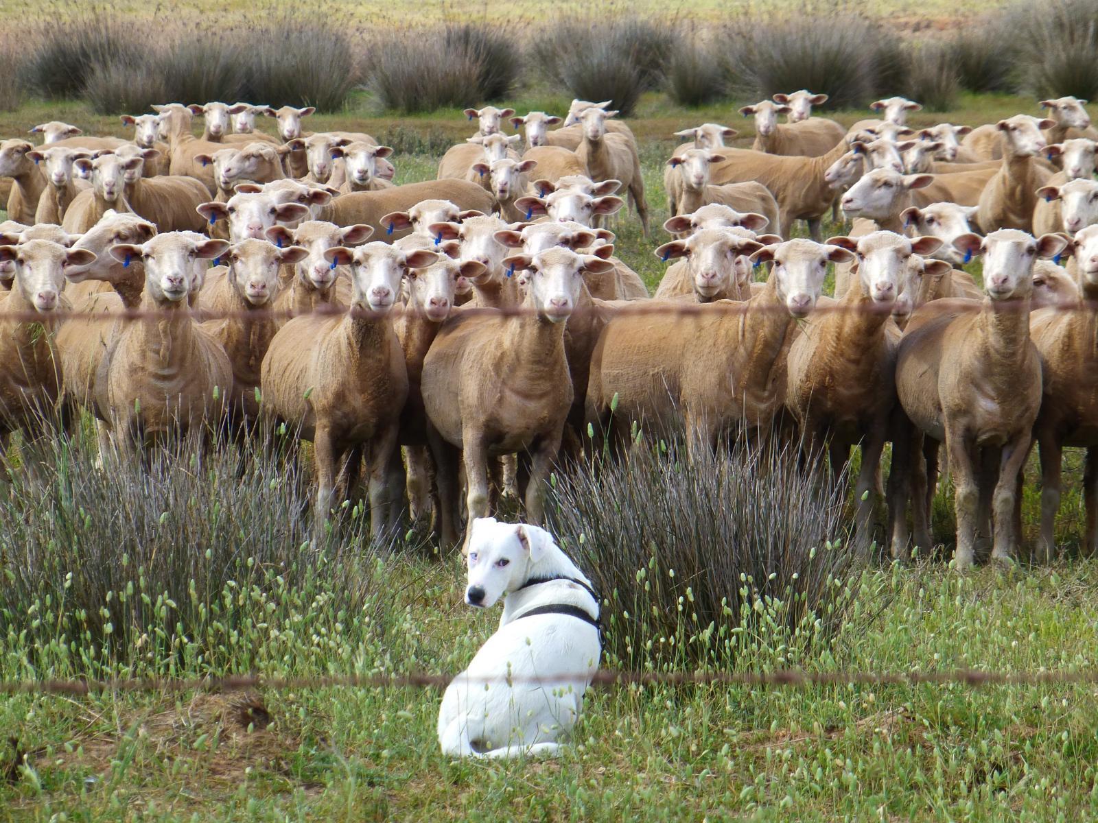 Жителям Брянска запретили косить траву и пасти скот на границе