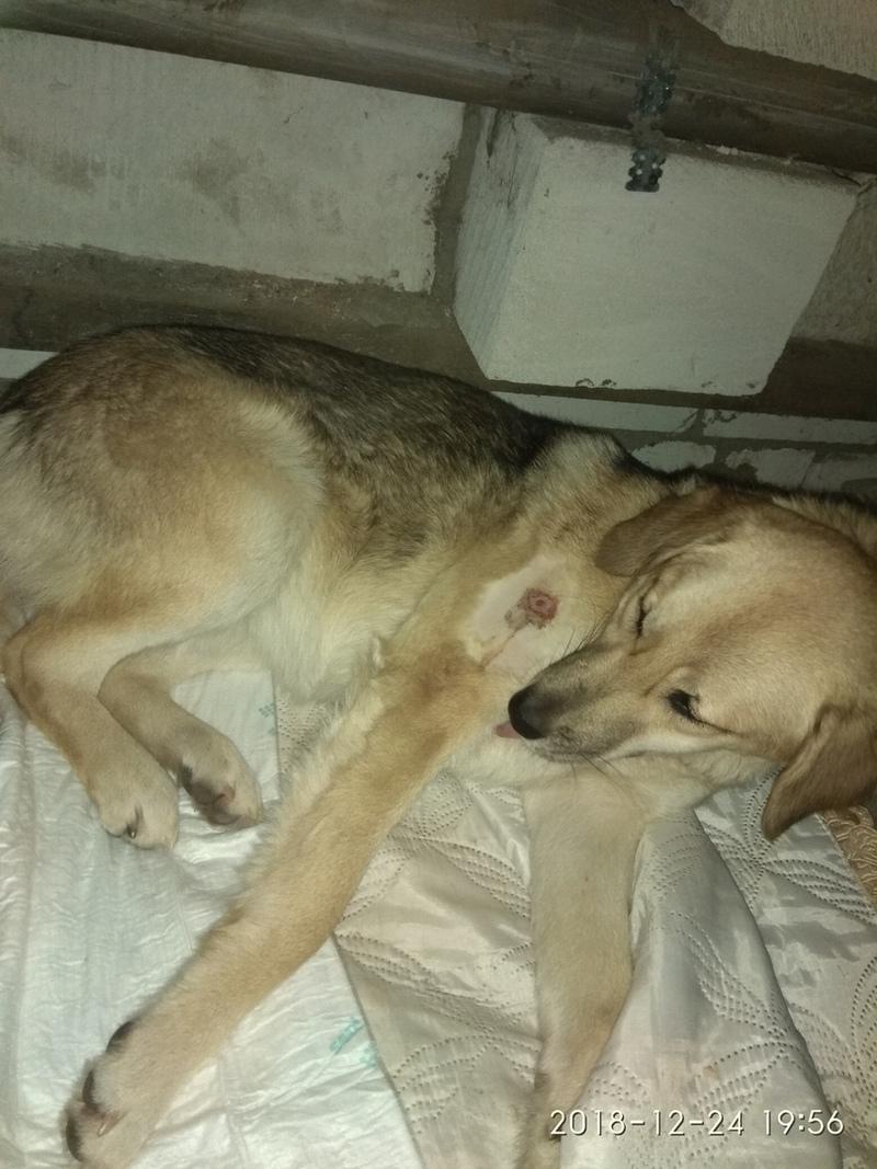 В Брянске живодер жестоко расправился с собакой