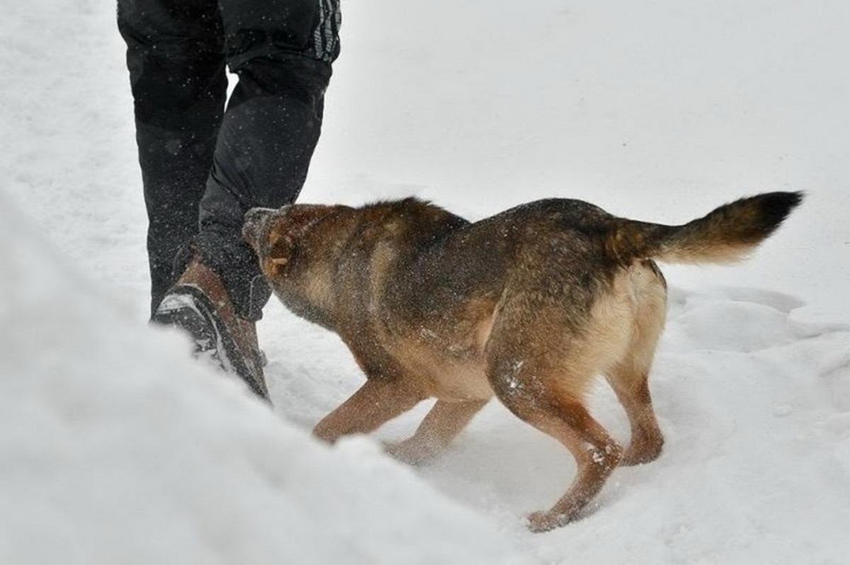 За год в Брянской области выявлено тридцать случаев заражения бешенством среди животных