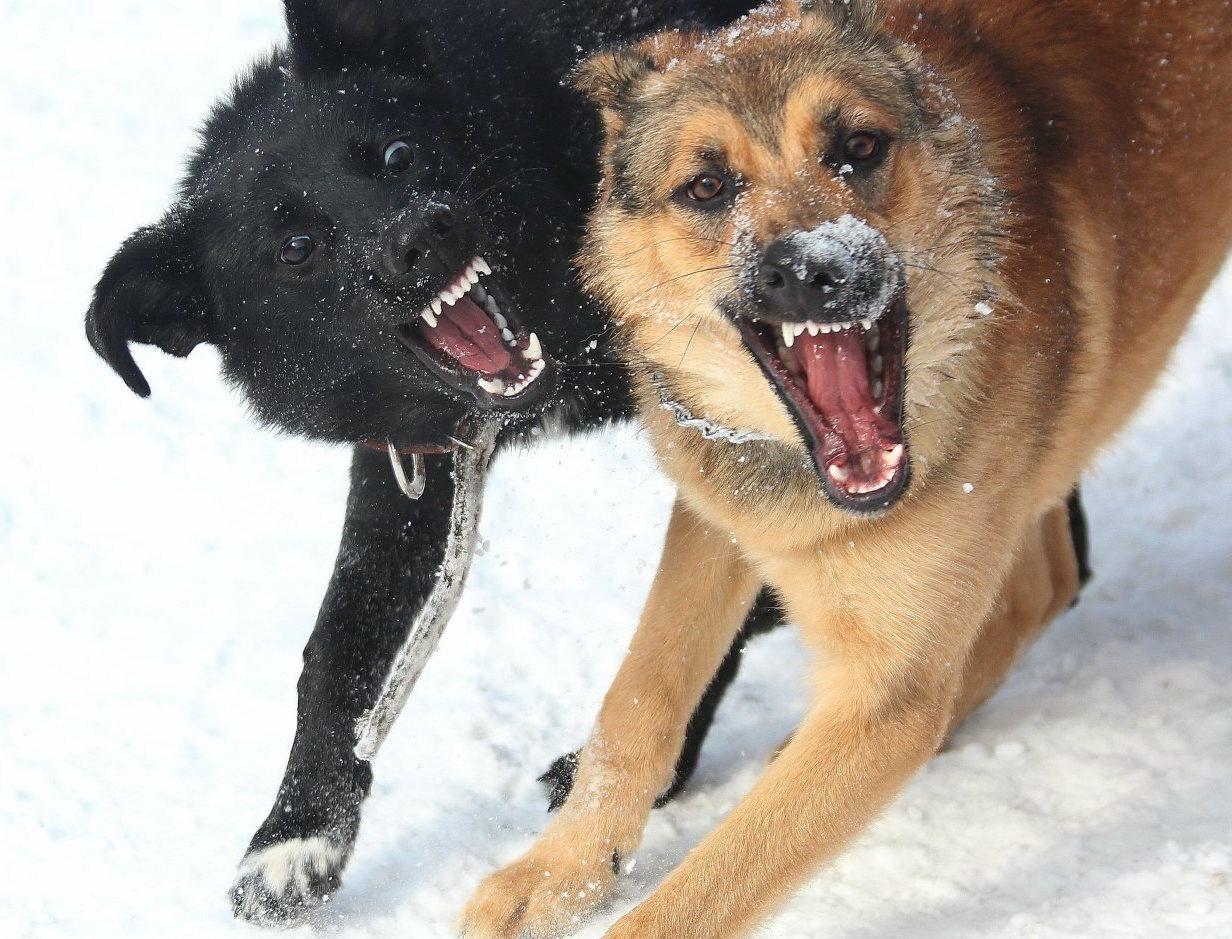 В Брянске возле школы №71 на женщину набросились бродячие собаки