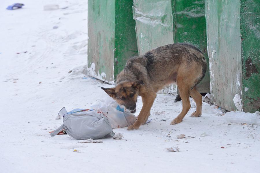 В Брянске собака напала на парня возле ТРЦ «МегаГринн»
