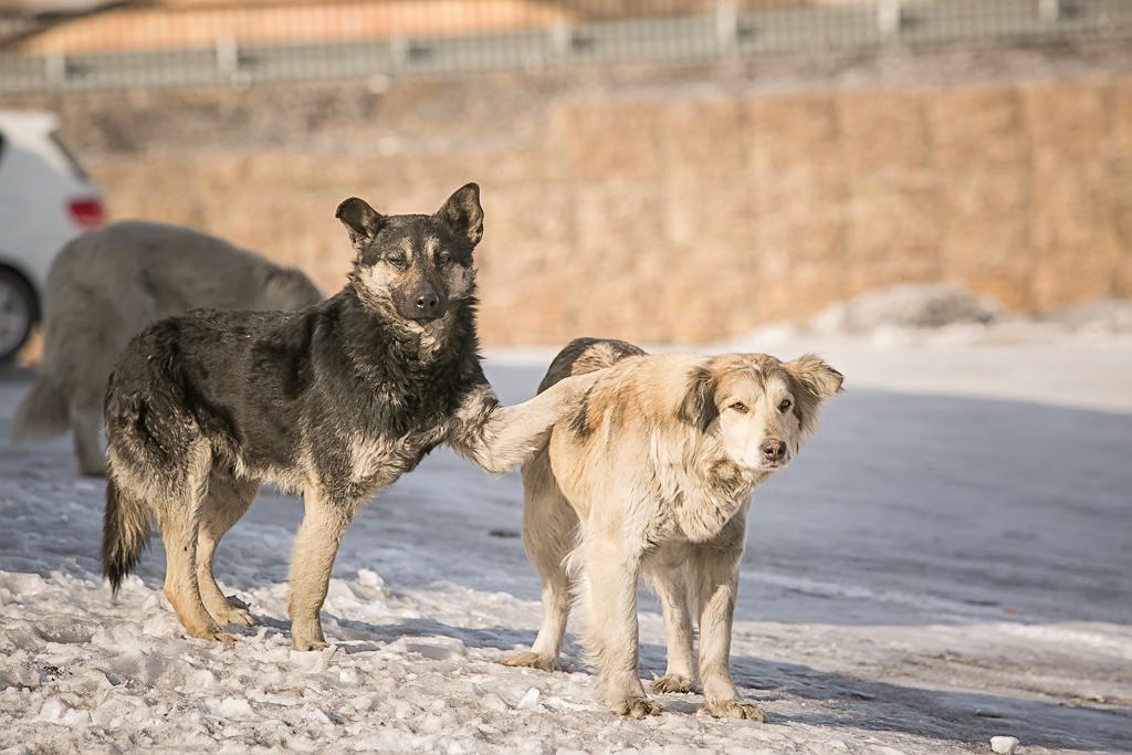 Богомаз раскритиковал брянских чиновников из-за собак