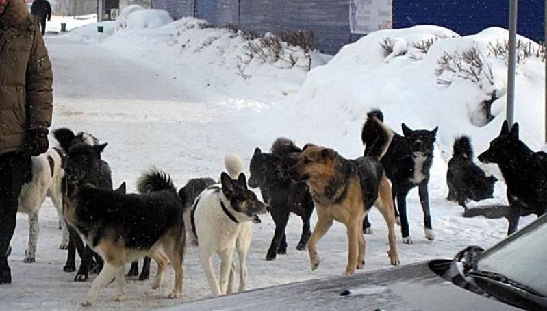 Александр Богомаз обвинил чиновников в бездействии в вопросе бродячих собак