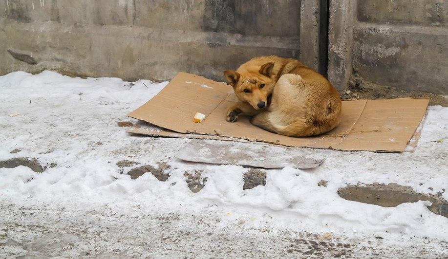Живодеры повесили собаку во дворе многоэтажки в Фокинском районе Брянска
