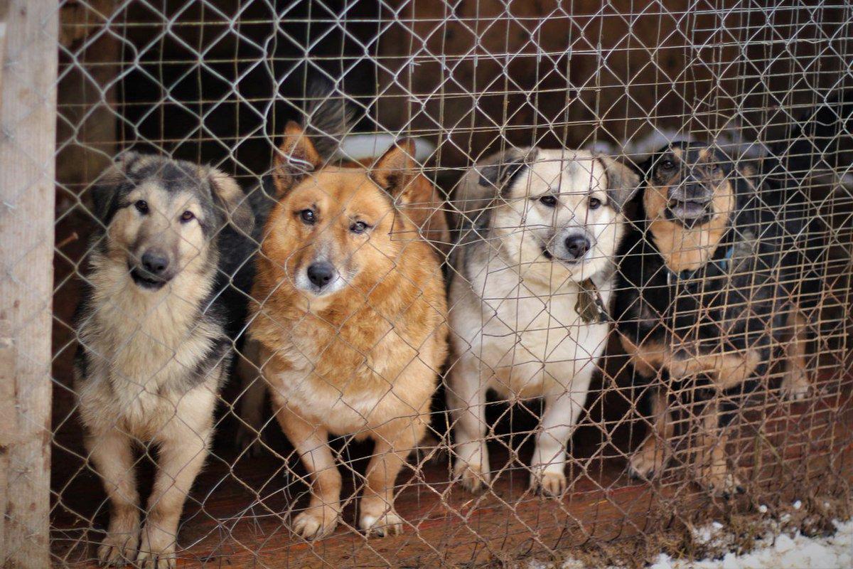 Приюту для животных в Фокино оказал помощь депутат Госдумы Николай Валуев