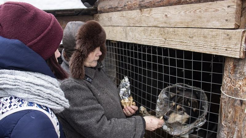 Бывшая брянская учительница приютила 48 бездомных собак
