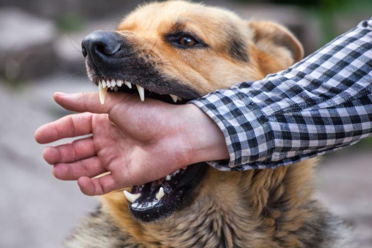 В Брянске возле Бежицкого рынка на женщину напала собака