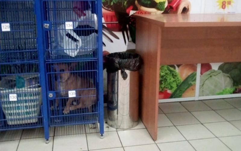 В брянском супермаркете заперли собаку в камере хранения