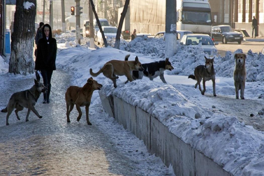 За выходные жертвами бродячих собак стали восемь жителей Карачева