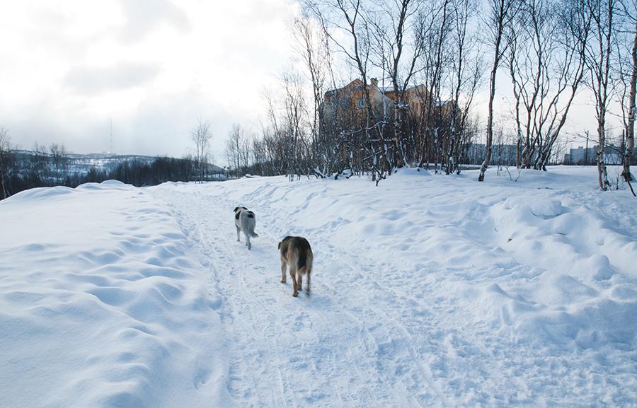 Губернатор Брянщины осудил чиновников за бездействие в вопросе бродячих собак