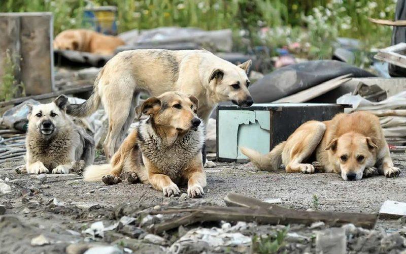 Бродячие собаки запугали жителей Брянска