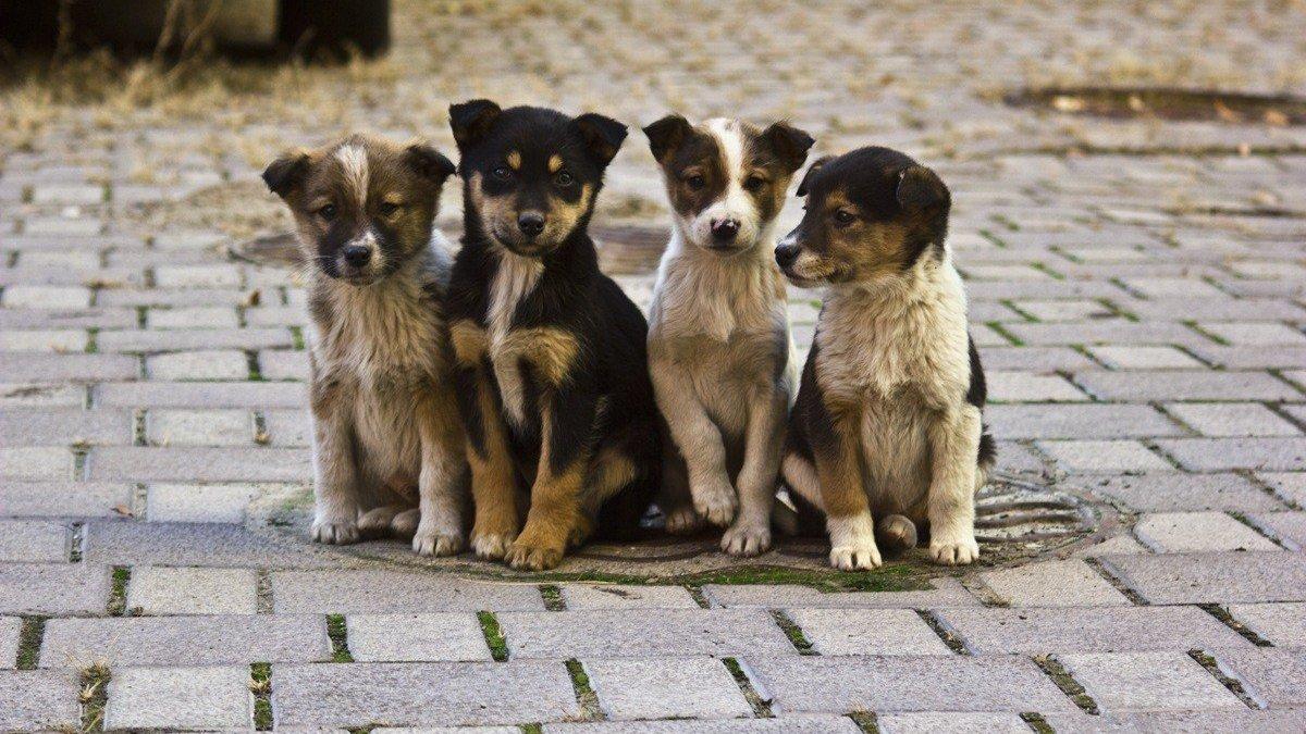 В Унече остался безнаказанным живодер, зверски убивший щенков