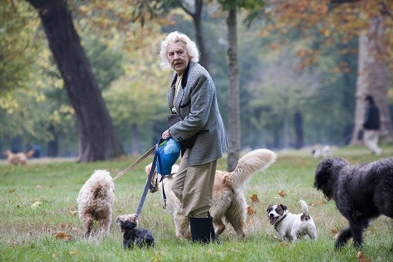 В Брянске 80-летняя пенсионерка приютила 15 бездомных собак