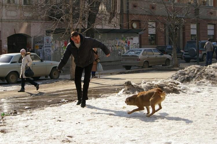 В Новозыбкове на людей нападают коты, собаки и крысы