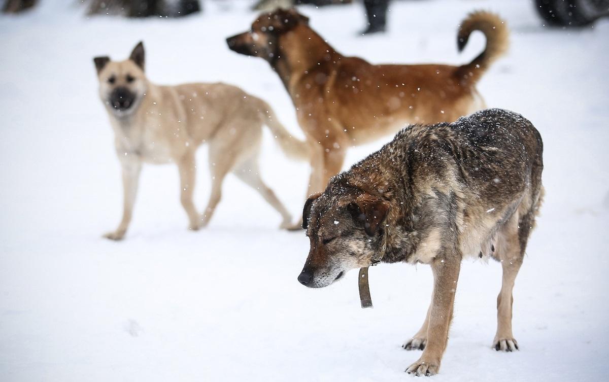 80-летняя пенсионерка из Брянска приютила 15 собак