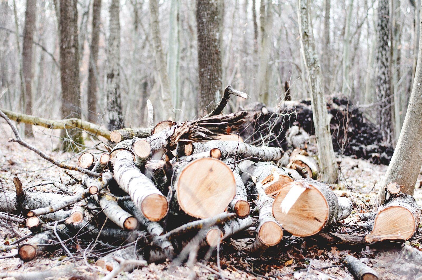 Жителя Почепского района задержали за незаконную вырубку сосен
