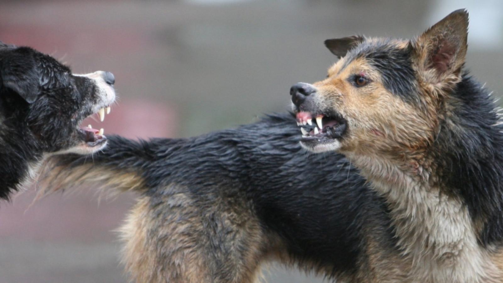 В Карачеве возле администрации бездомные псы покусали женщину
