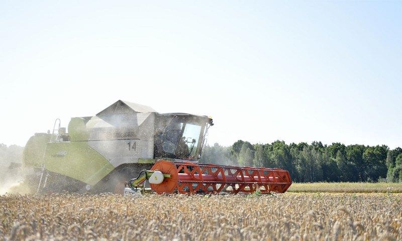 Стародубский район побил рекорды по урожайности картофеля