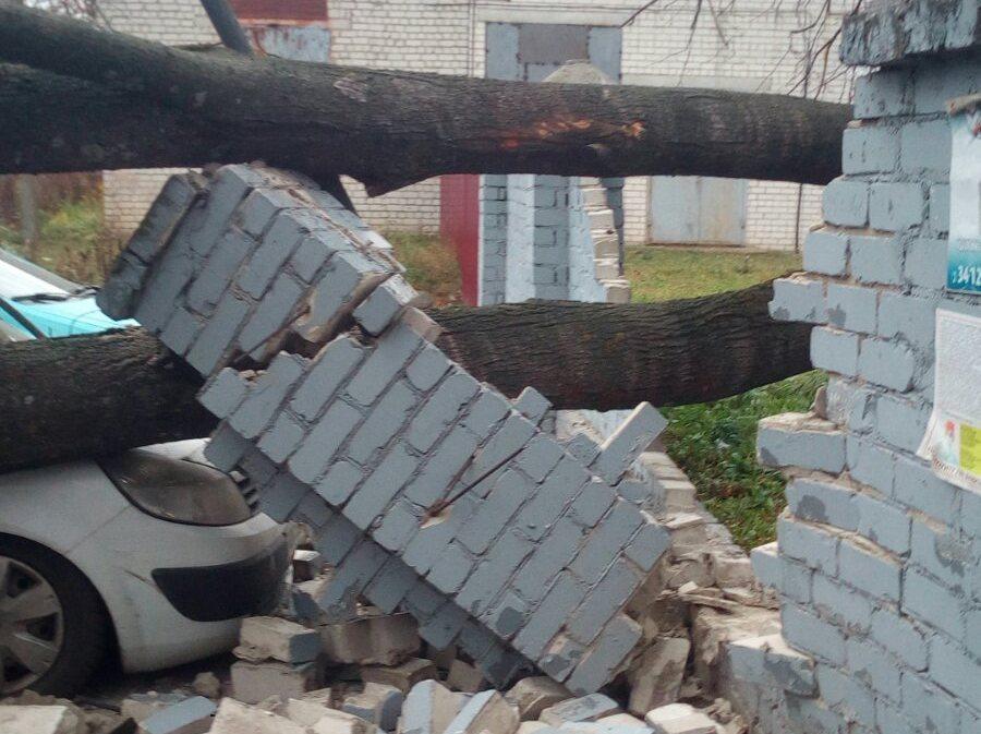 В Брянске около больницы №1 на легковушку рухнуло дерево
