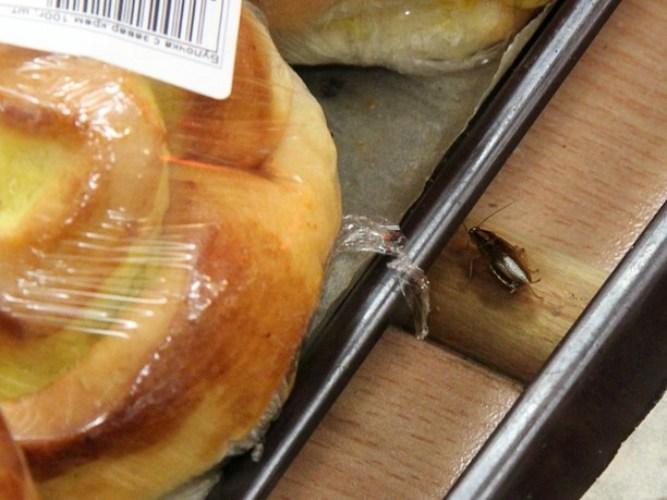 Брянцы сняли на видео нашествие тараканов в местном гипермаркете