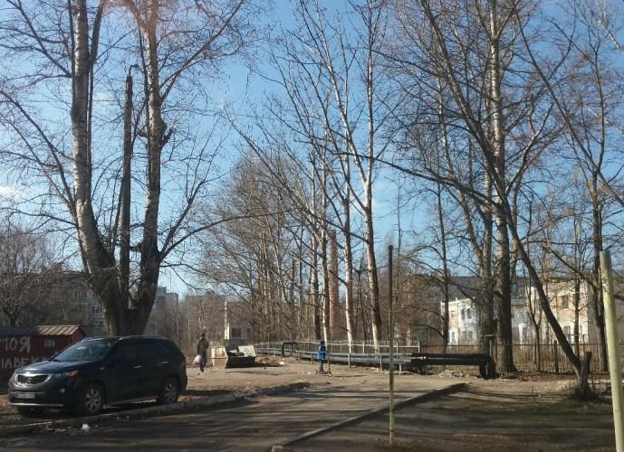 Жители многоэтажек боятся падения тополей в Бежицком районе Брянска
