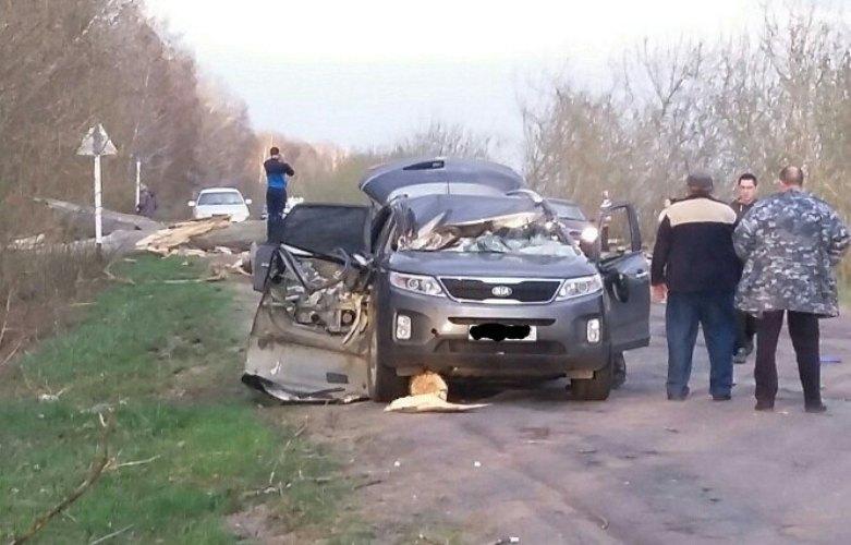 В Стародубском районе тополь раздавил автомобиль с пассажиром