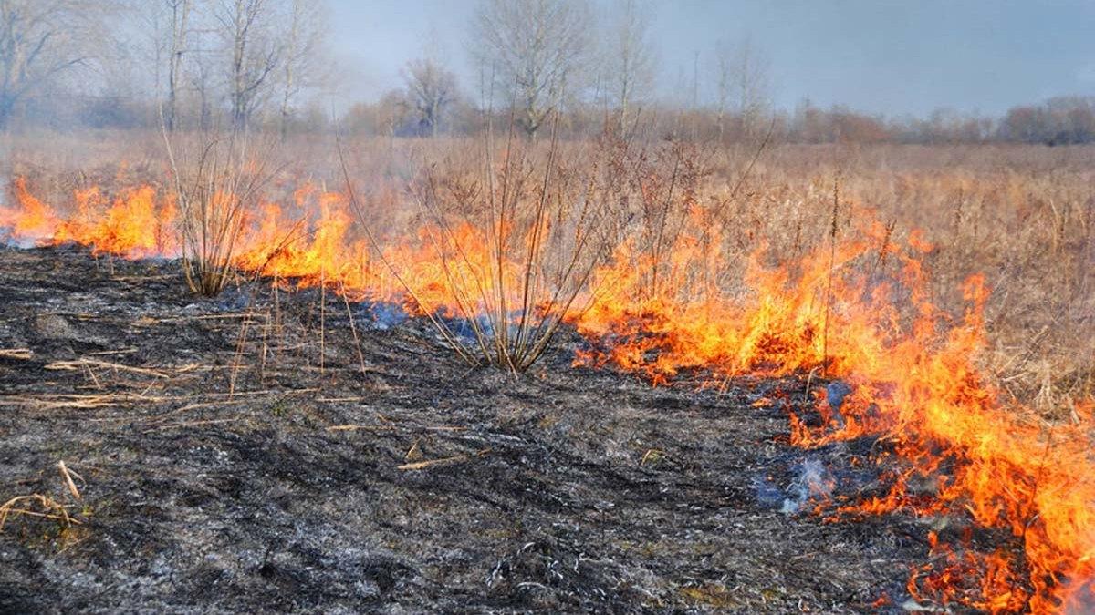 В бежицком посёлке Чайковичи произошёл пожар из-за поджога травы