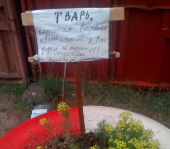 «Чтобы у вас руки и ноги отсохли»: брянцев проклинают за сорванные цветы