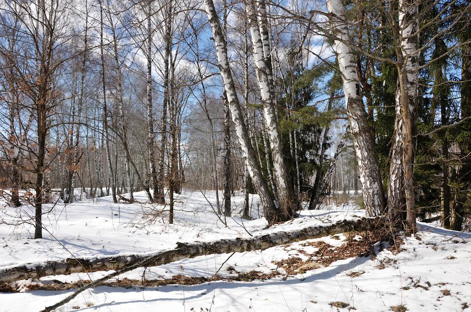 Завтра в Брянской области потеплеет до +5 градусов