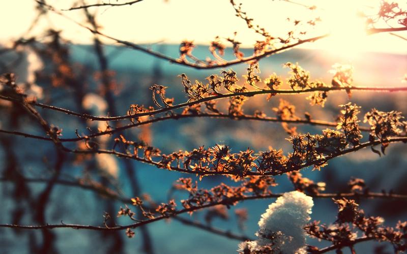 Завтра в Брянске потеплеет до +19ºC