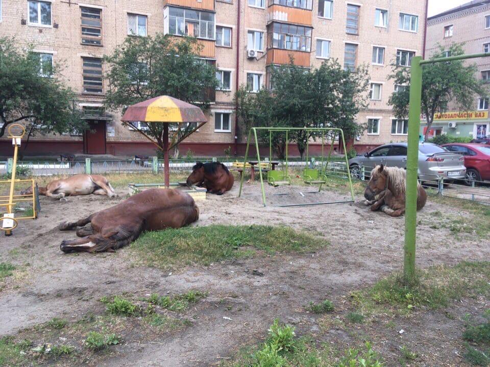 Лошади захватили детскую площадку в одном из брянских дворов