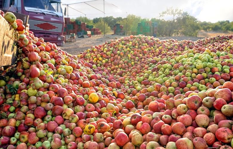 20 тонн опасных яблок обнаружили брянские пограничники