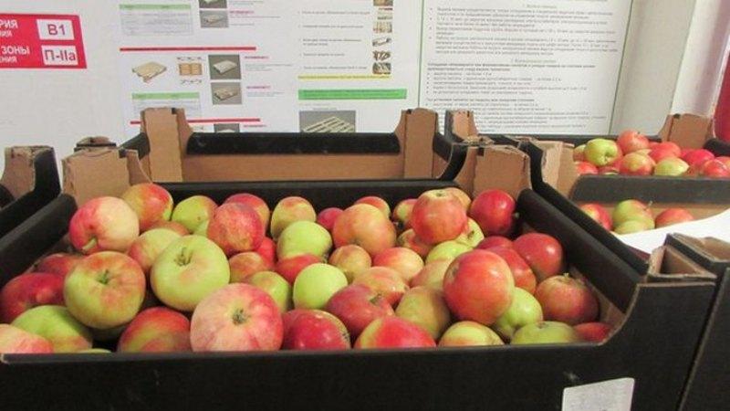 В Новозыбкове уничтожили 21 тонну винограда, яблок и томатов