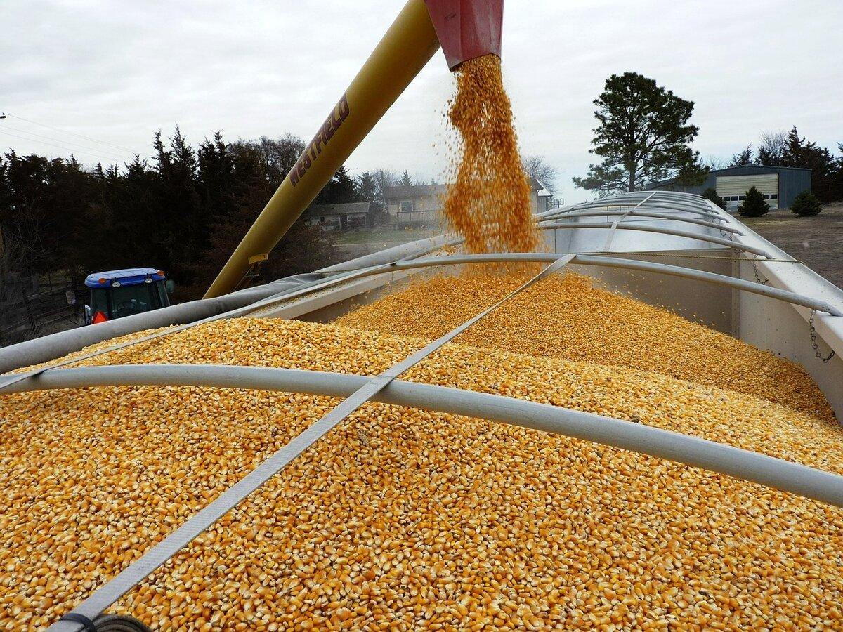 Из Брянской области экспортировали 225 тысяч тонн зерна