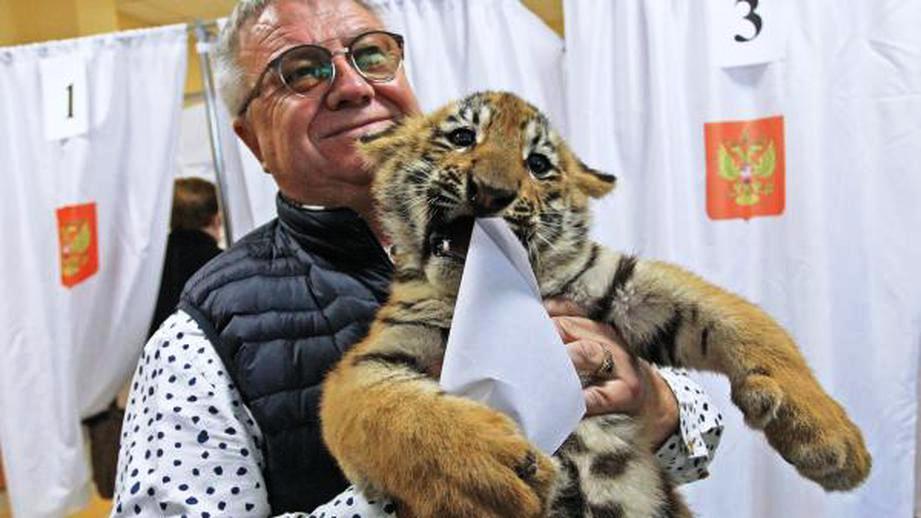 Депутат пришел на выборы с тигрятами