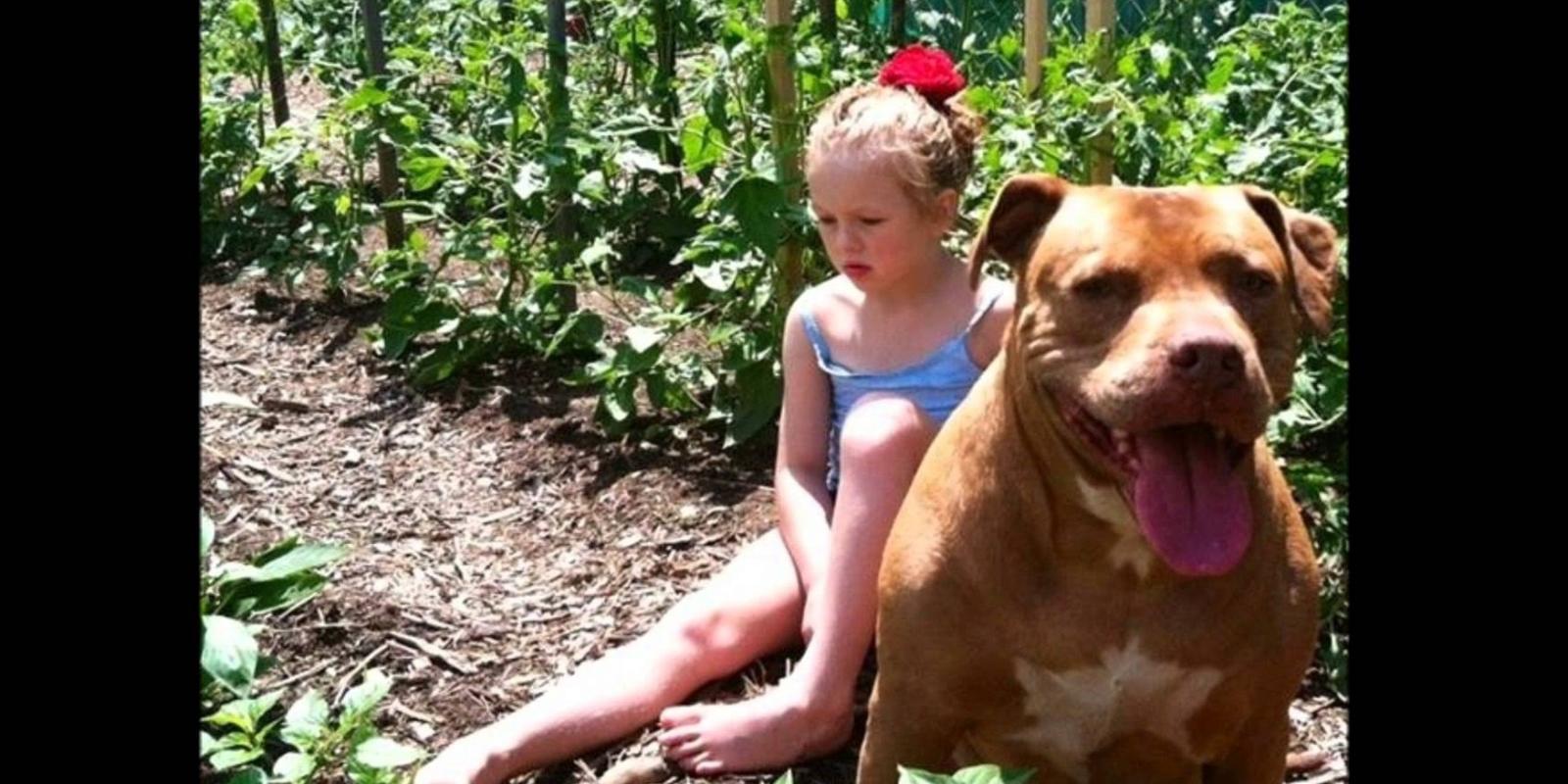 Бойцовский пес отбил девочку унасильника