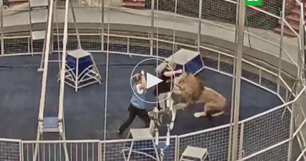 Лев порвал руку дрессировщику