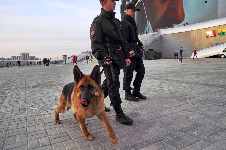 Совбез РФ спомощью зарубежных коллег предотвратили теракты наЧМ-2018