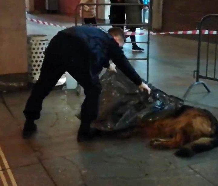 ВМосковском метрополитене полицейский убилсобаку