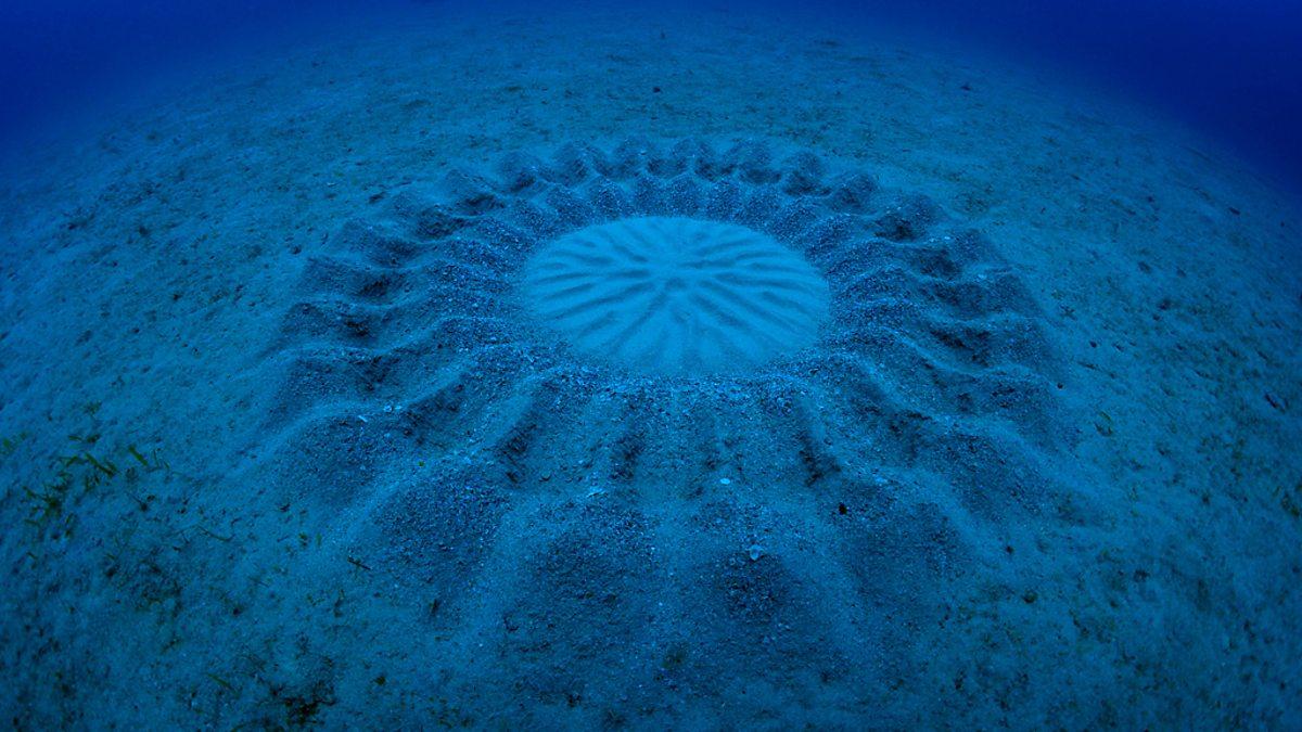 Это касается всех: ученые ошарашены жутким звуком со дна океана