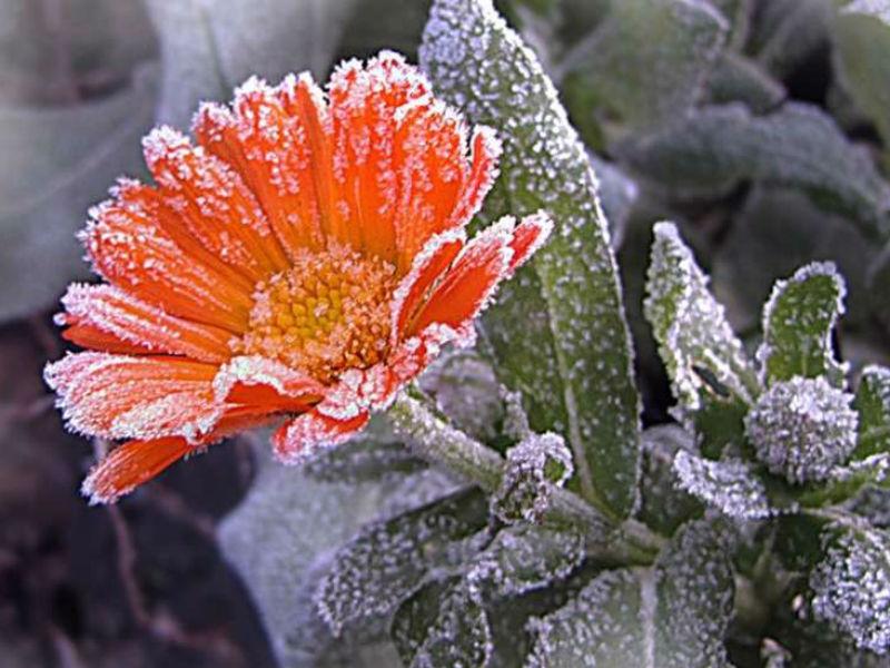 «Михаил ― заморозком прихватил»: когда в Брянске ждать морозов?